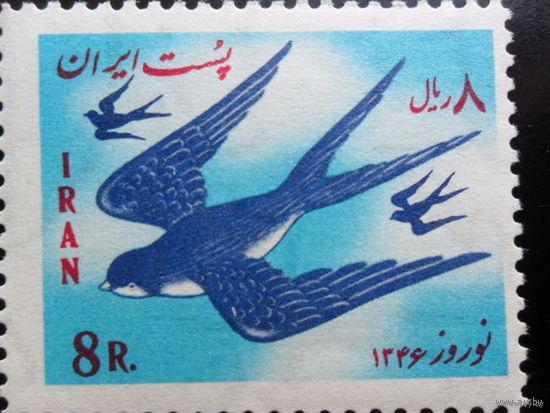 Иран ласточка