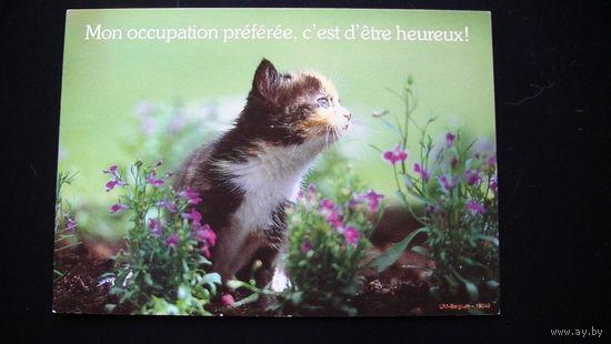 Открытка  подписанная (Mon occupation preferee).   распродажа