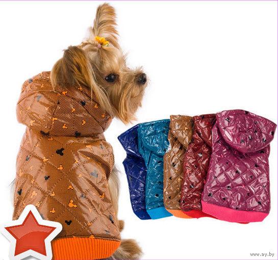 Курточка с капюшоном для прогулок дождливой осенью и зимой (21)