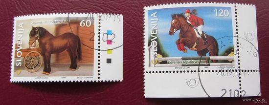 Словения, кони, лошади