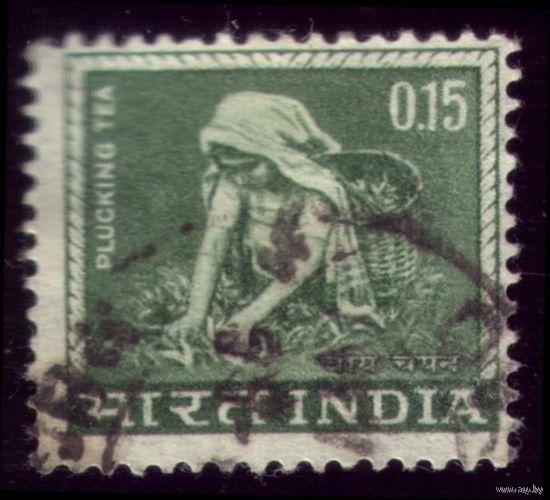 1 марка 1965 год Индия Сбор чая