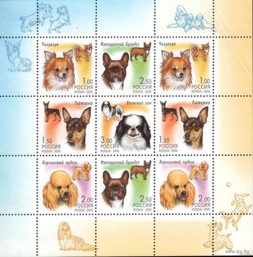 Малый лист 2000 год Россия Собаки
