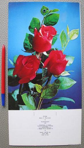 Картинка под отрывной календарь, Розы (СССР)