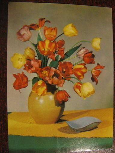 Цветы 1965г. ГДР