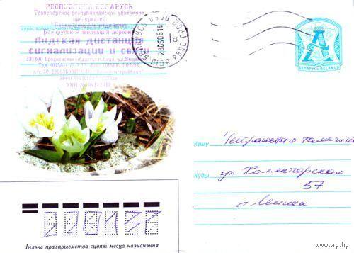 """2006. Конверт, прошедший почту """"Цветы: белые крокусы"""""""
