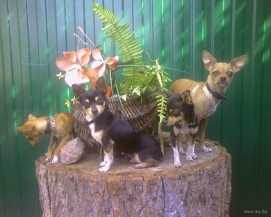 Гостиница для животных Dog & Cat Days
